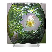Sunlight On The Wild Pink Rose Shower Curtain