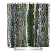 Sunlight Through Cacti Shower Curtain