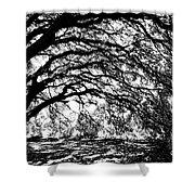 Sunlight Through Spanish Oak Tree - Black And White Shower Curtain