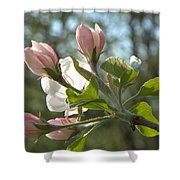 Sunlit Apple Blossoms Shower Curtain