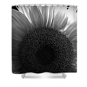 Sunlit Bw Shower Curtain