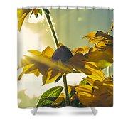Sunlit Daisies Shower Curtain
