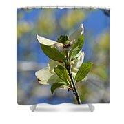 Sunlit Dogwood Blossoms Shower Curtain
