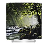 Sunlit Dream Shower Curtain