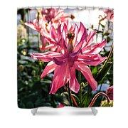 Sunlit Fancy Pink Columbine Shower Curtain