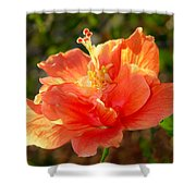 Sunlit Hibiscus Shower Curtain