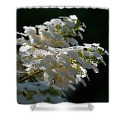 Sunlit Hydrangeas Shower Curtain