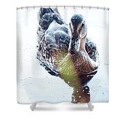 Sunlit Mallard Shower Curtain