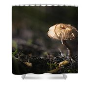 Sunlit Mushroom Shower Curtain