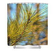 Sunlit Pine Leaders Shower Curtain