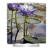 Sunlit Purple Lilies  Shower Curtain