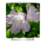 Sunlit Rhododendrons Shower Curtain
