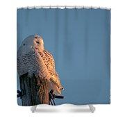 Sunlit  Snowy Shower Curtain