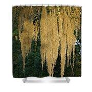 Sunlit Spanish Moss Shower Curtain