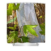 Sunlit Sycamore Leaves In Andreas Canyon In Indian Canyons-ca Shower Curtain