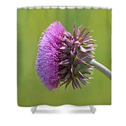 Sunlit Thistle Shower Curtain