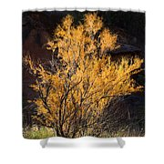 Sunlit Tree In Palo Duro Canyon 110213.06 Shower Curtain