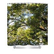 Sunlit Tree Tops Shower Curtain