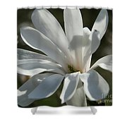 Sunlit White Magnolia Shower Curtain
