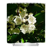 Sunlit Wildflower Shower Curtain