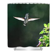 Sunlit Wings Shower Curtain