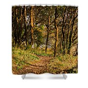 Sunlit Woods In Late Autumn Shower Curtain