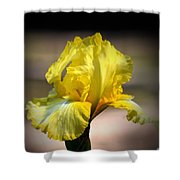 Sunlit Yellow Iris Shower Curtain