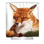 Sunnin' Red Fox Shower Curtain