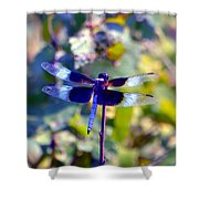 Sunning Dragonfly Shower Curtain