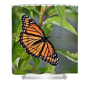 Sunning Royalty II Shower Curtain