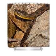 Sunning Snake Shower Curtain