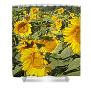 Sunning With Friends Shower Curtain