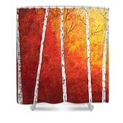 Sunset Birches Shower Curtain