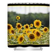 Sunny Days 8466 Shower Curtain
