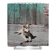Dog Enjoying A Sunny Doorstep Shower Curtain