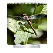 Sunny Dragonfly Shower Curtain