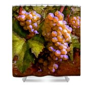 Sunny Grapes - Edition 1 Shower Curtain