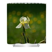 Sunny Iris Shower Curtain