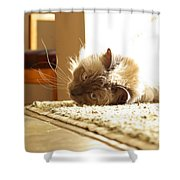 Sunny Jack Shower Curtain