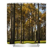 Sunny Larch Grove Shower Curtain
