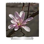 Sunny Pink Magnolia Blossom Shower Curtain