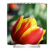 Sunny Rays Shower Curtain