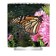 Sunny Side Monarch Shower Curtain
