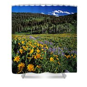 Sunny Spring Day Shower Curtain