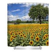 Sunny Sunflowers Shower Curtain