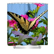 Sunny Tiger Swallowtail  Shower Curtain