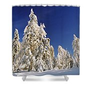 Sunny Winter Day Shower Curtain