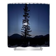 Sunny Winter Pine Shower Curtain