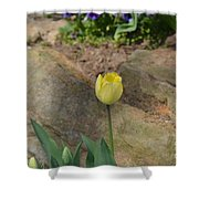 Sunny Yellow Tulips Series  Picture B Shower Curtain
