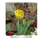 Sunny Yellow Tulips Series  Picture C Shower Curtain